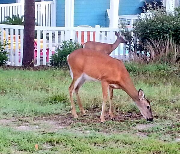 """Met on my way to Morning Prayer #Episcopal """"As the deer longs for water, my heart longs for you, o God."""" #SMSunday http://t.co/OxzjMmbfYk"""