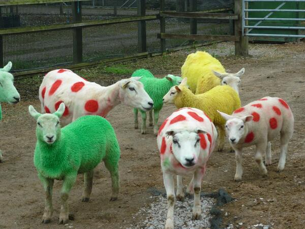 We're loving these #TDF sheep - will they make it to this year's Great Yorkshire Show (8-10 July)?! @letouryorkshire http://t.co/wt3KHhXMqN