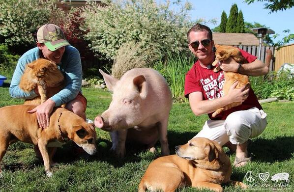 Incredibly inspiring! RT @EstherThePig: @VegNews we've done it! Over 400k in under 60 days!! http://t.co/k8DfcIDcEL http://t.co/biZsHO9EAu