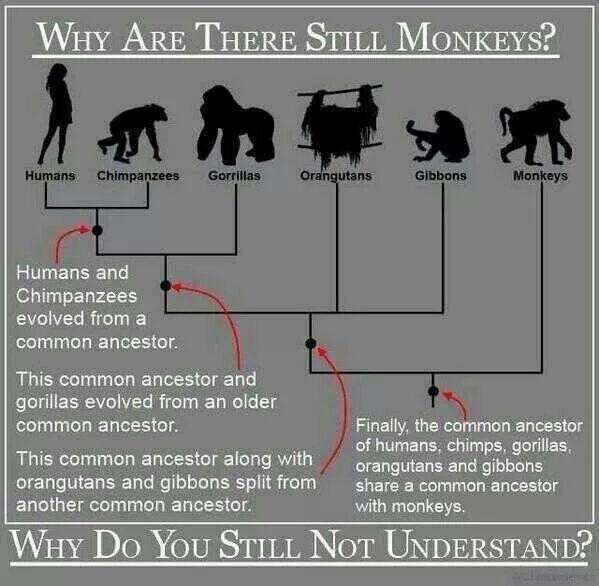 Why do we still have monkeys