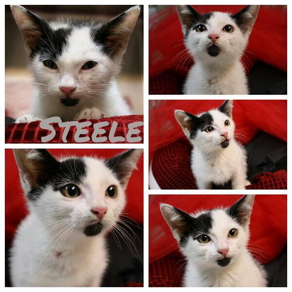 STHS needs your help to give Steele his 2nd chance! Please RT   https://t.co/qHS1C3yVY8 http://t.co/hyrvlbPLk6