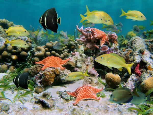 Triste noticia: Los corales del Caribe podrían desaparecer en 20 años http://t.co/oNHH6khHlK http://t.co/KECbo1vZgq