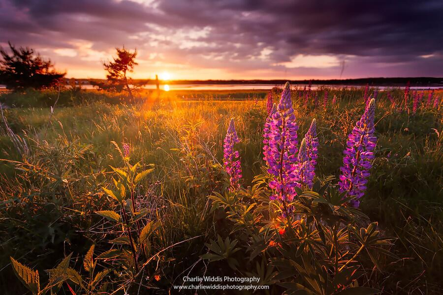 Twitter / ZaibatsuPlanet: Light Embrace by CharlieWiddis ...
