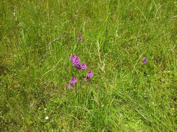 @Love_plants @BumblebeeTrust @BasingstokeGov basing view leave alone dont mow please http://t.co/AKq1KUkaO4