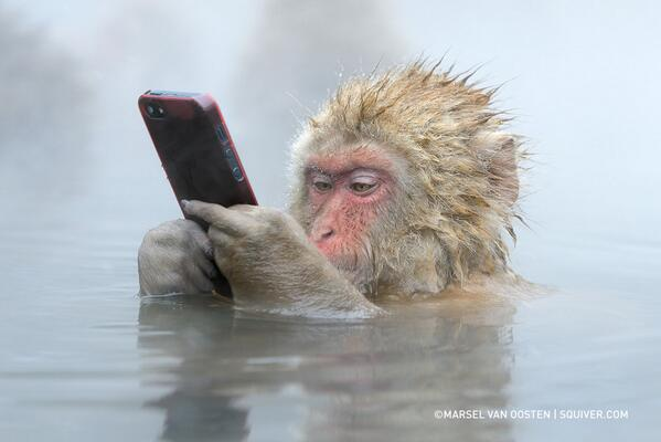 """The Story Behind This Incredible Photo Of A Monkey Using An iPhone"" http://t.co/ASWD3YFxyX http://t.co/8yB1VyH0ly"