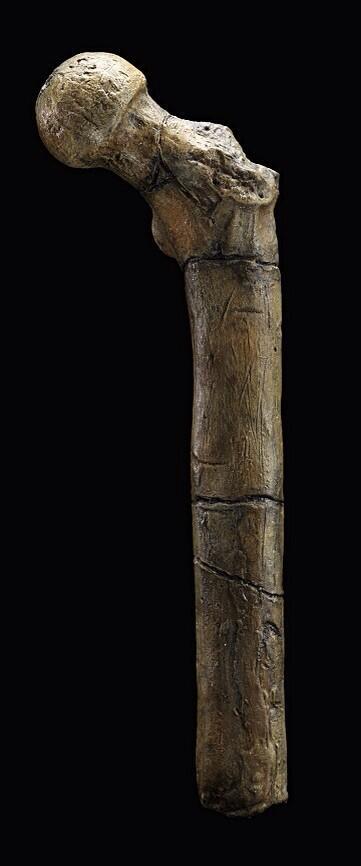 Earliest evidence of walking upright on two legs – thigh bone from Tugen Hills, Kenya #tourHHO http://t.co/sc8aVOFzB3