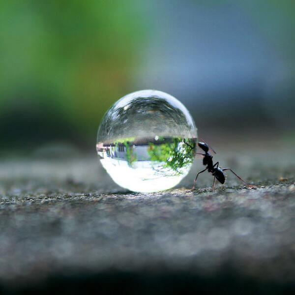 RT @ThatsEarth: Ant pushing a water droplet. Photo by Rakesh Rocky. http://t.co/Teh4GDSj9F
