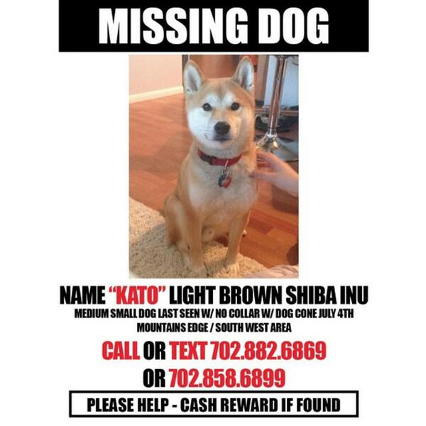 #Vegas #missing #dog in Mountains Edge area. Please #RT! http://t.co/xPIv5YO0n2
