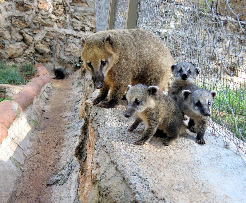 Antalya Zoo on Twitter: