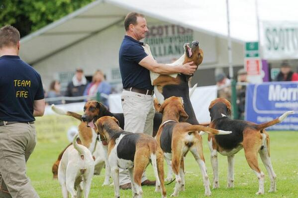 One of my favourite pics from today's Fair @ScotGameFair #sgf2014 http://t.co/9cCaR1fNI0