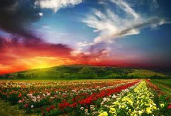 Love is the flower you've got to let grow. ~John Lennon http://t.co/KAjJNXWD7V