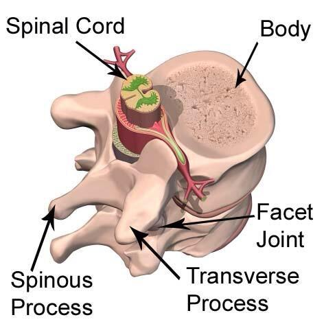 Shoulder Doctor On Twitter Neymar Fracture Transverse Process