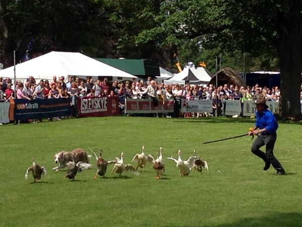 A lovely day for...duck wrangling? All the fun of the @ScotGameFair here at Scone Palace... http://t.co/OFN4FFf17e