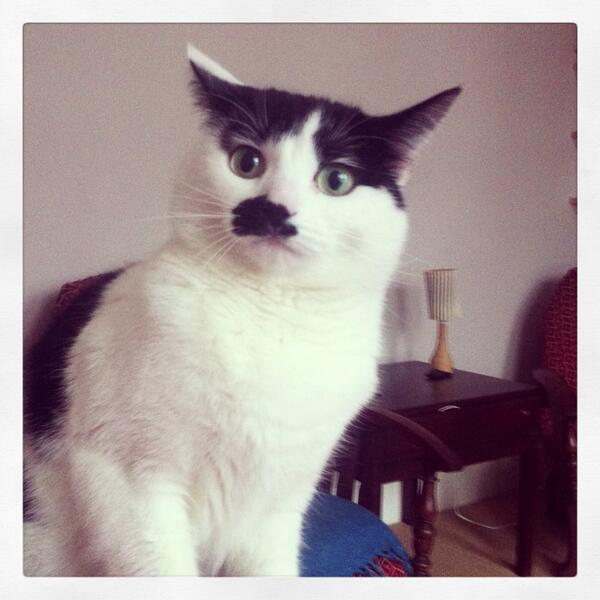 Mimi's missing again...little b&w mog, Kitler tache, last seen Thursday on Herne Hill pls RT @LoveHerneHill ? X http://t.co/NNoWzZ5doV