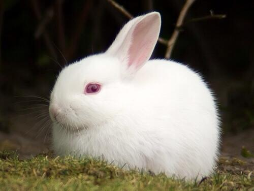 Ali A On Twitter Quot Just Seen An Albino Rabbit In The Wild