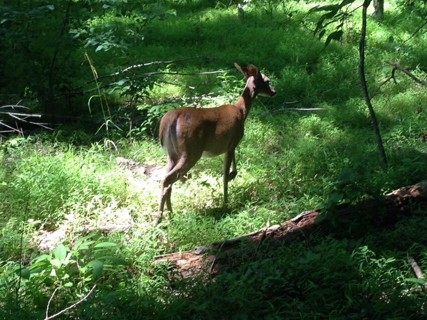 Twitter / emh2625: This beautiful little deer ...