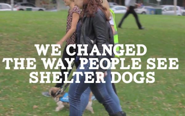 Neat! Human Walking Program via @LostDogsHome #Melbourne  http://t.co/ypqVohXupc http://t.co/Eo6s1XTrxr #CSFFSF2014 http://t.co/8yEfnDpUMS