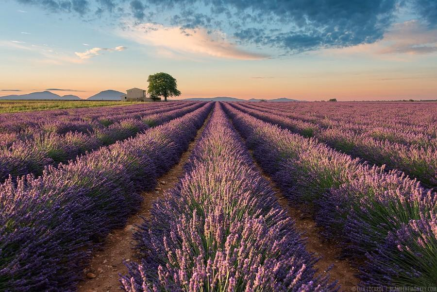 Twitter / ZaibatsuPlanet: Colors of Valensole by ...