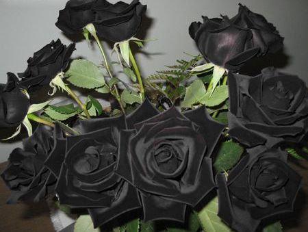 トルコに咲く天然の「黒バラ」はドキッとするほど黒かった…黒バラの花言葉は「貴方はあくまで私のモノ」