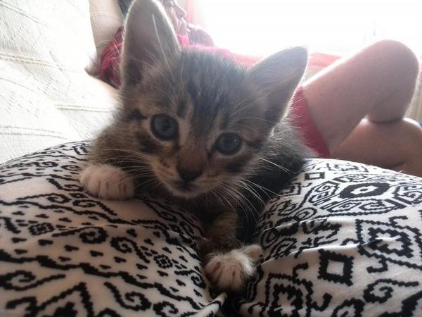 Mio, mi gatito pequerrecho