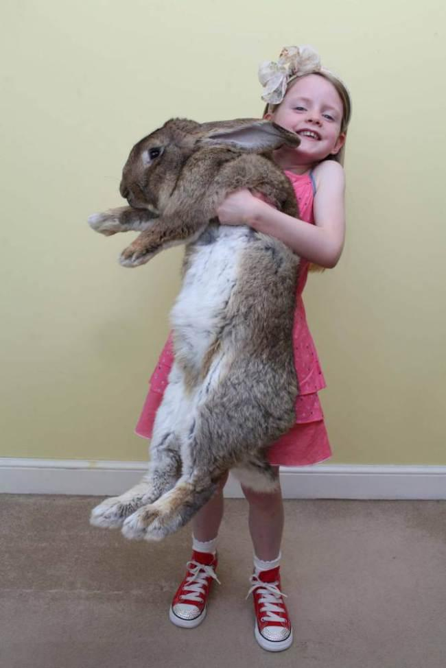 Smallest rabbit breed in the world