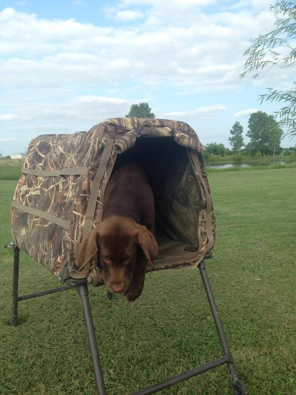 SWS: Invisilab G2 dog blind/ stand/ crate