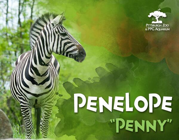 It's official! Penelope, Penny for short, is the newest member of our Zoo family! #zooforall http://t.co/QeL9qXVxxE