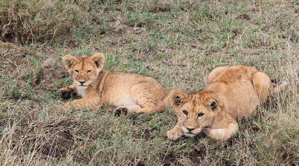 Two reasons #WhyILoveKenya http://t.co/wesAkhcmiM