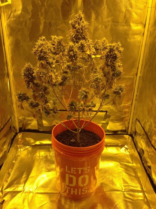 how to make a bucket for weed