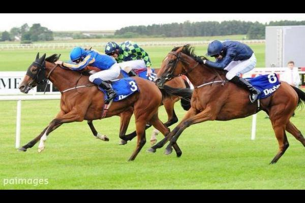 Amazing to think Joseph was 2nd on Tapestry in Irish Oaks when you see this photo of his saddle in the finish http://t.co/Yacl6WGnL3