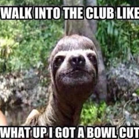Funny Sloth Pictures With Girl