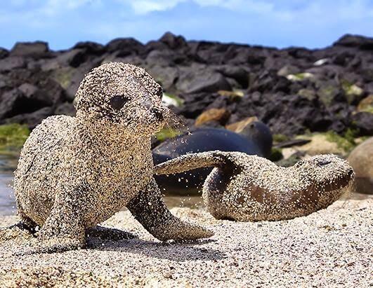 Baby Seals - Magazine cover