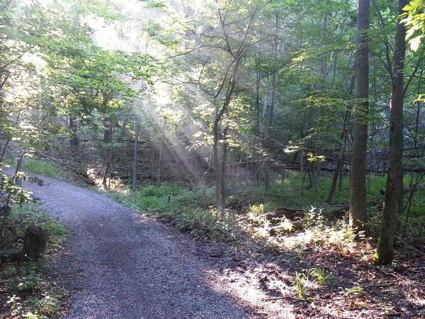 Running on the Spring Creek Trail, Dundas Valley Conservation Area