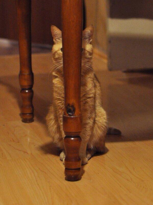 隠れてるつもり… http://t.co/eZybVc6RSk