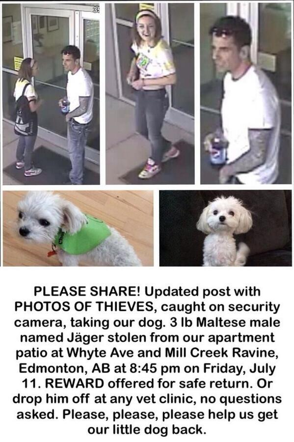 @Anthony_Wiggle this sweet dog was taken from my friends home. Can you help by RTing. CC: @JessieLemire http://t.co/WCEPkU5XJA