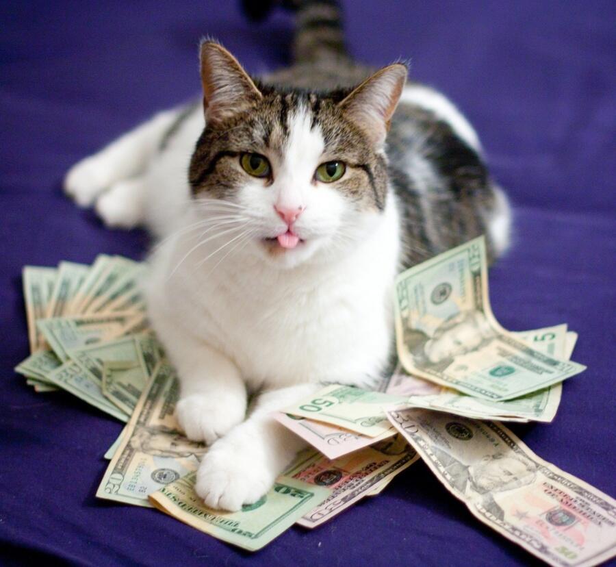 Надписью, картинки животные и деньги