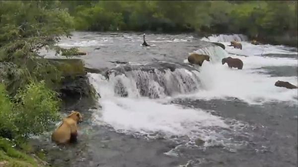 OMG it's a bearnanza on #bearcam rightthisverysecond! http://t.co/78Z0jphoDY http://t.co/YN3LC4wA4A