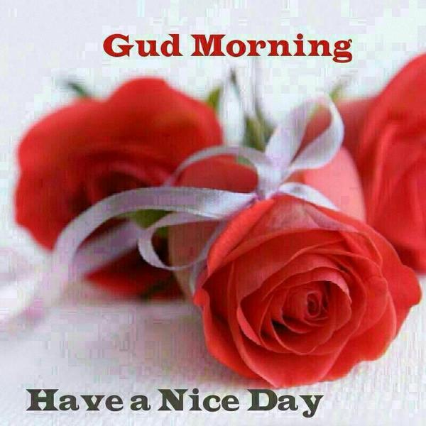Saba Ansari On Twitter Good Morning Guys Have A Nice Day Httpt