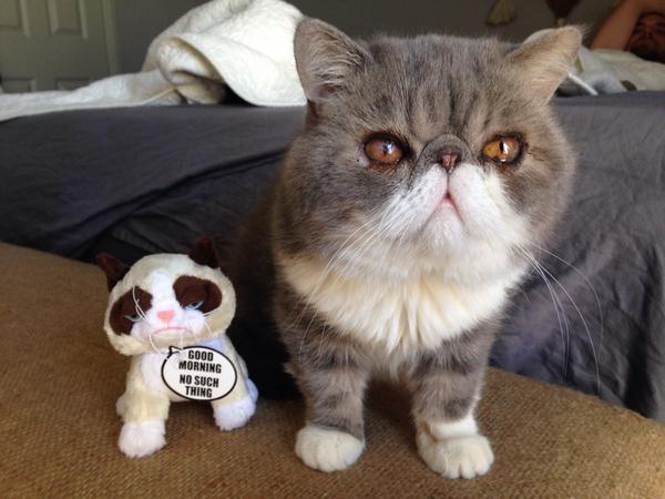 Mornings are hard for Persian cats @tankgirlyo http://t.co/A5BRF1qteB