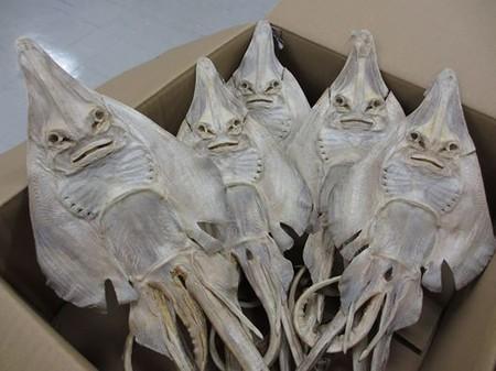 """何星人ですか。""""@motoshiromizu: マリンワールドのフェイスブックに掲載されたエイの干物=マリンワールド提供 http://t.co/TjsMasxRFd"""""""