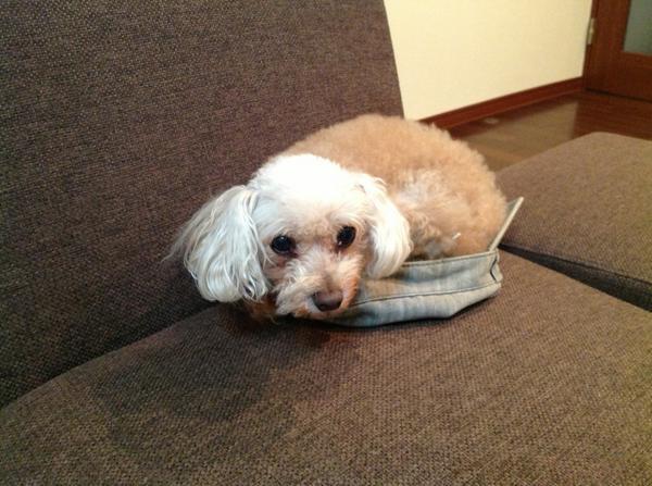 わらわが年のせいか、自分の寝床と私の帽子を勘違いして 困るのです。 http://t.co/TPdcijmiKB