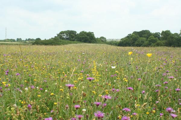 Doddershall Meadow near Aylesbury. HS2 would go right through the middle of this. http://t.co/Jnm1nFPS8O