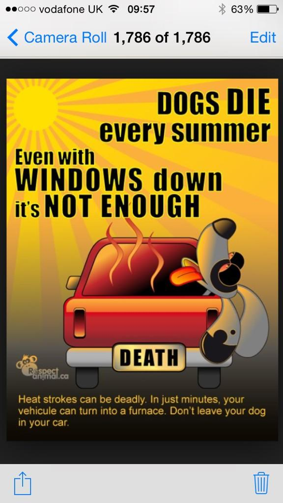 Enjoy the beautiful weather one and all. But remember, don't leave the dog in the car. Not even for 5 minutes. http://t.co/ylqN4nQU0N