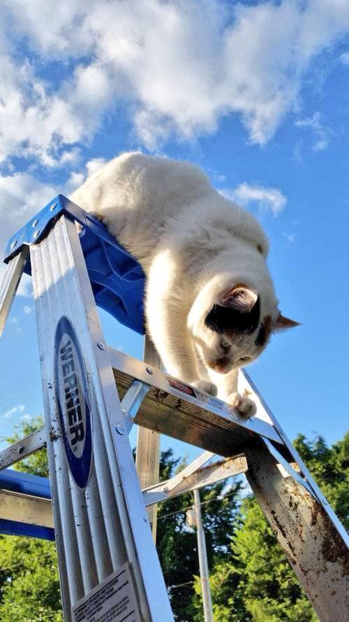 「うちの猫が叫んでいたので庭に出てみた」→「この状態で固まってた…」人気の写真ニャ http://t.co/9Kexjp0Cux http://t.co/UeDaWlRwSE