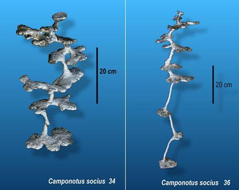 すこしも狭くないわ♪ RT @FUKUBLOG: アリの~穴の~ 巣型見せるのよ~♪ http://t.co/Ttf4kcBEq6
