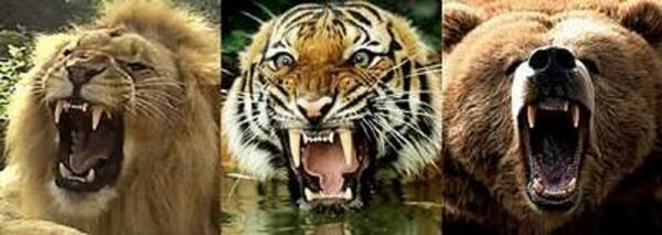 Are Big Cats Stronger Than Big Dogs