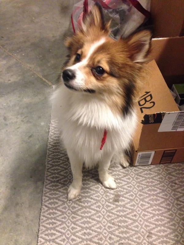 Just found this little pup @UnionMarketDC. Anyone lose her? http://t.co/d20zHLW1wj
