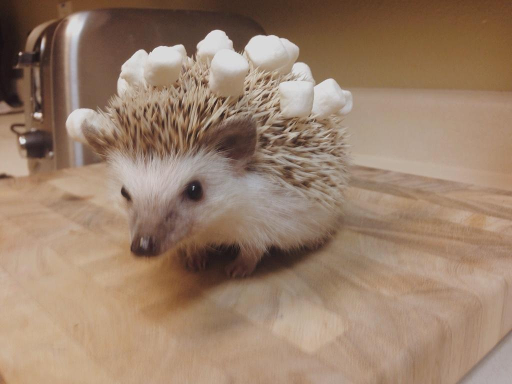 """Nala the Hedgehog on Twitter: """"I'm the life of the party ..."""