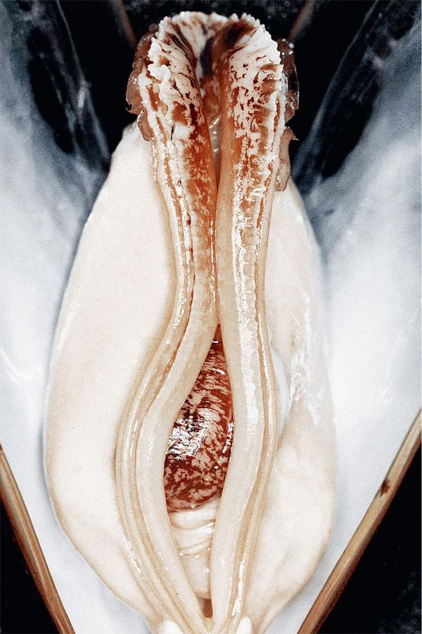 Food that look like vagina s not
