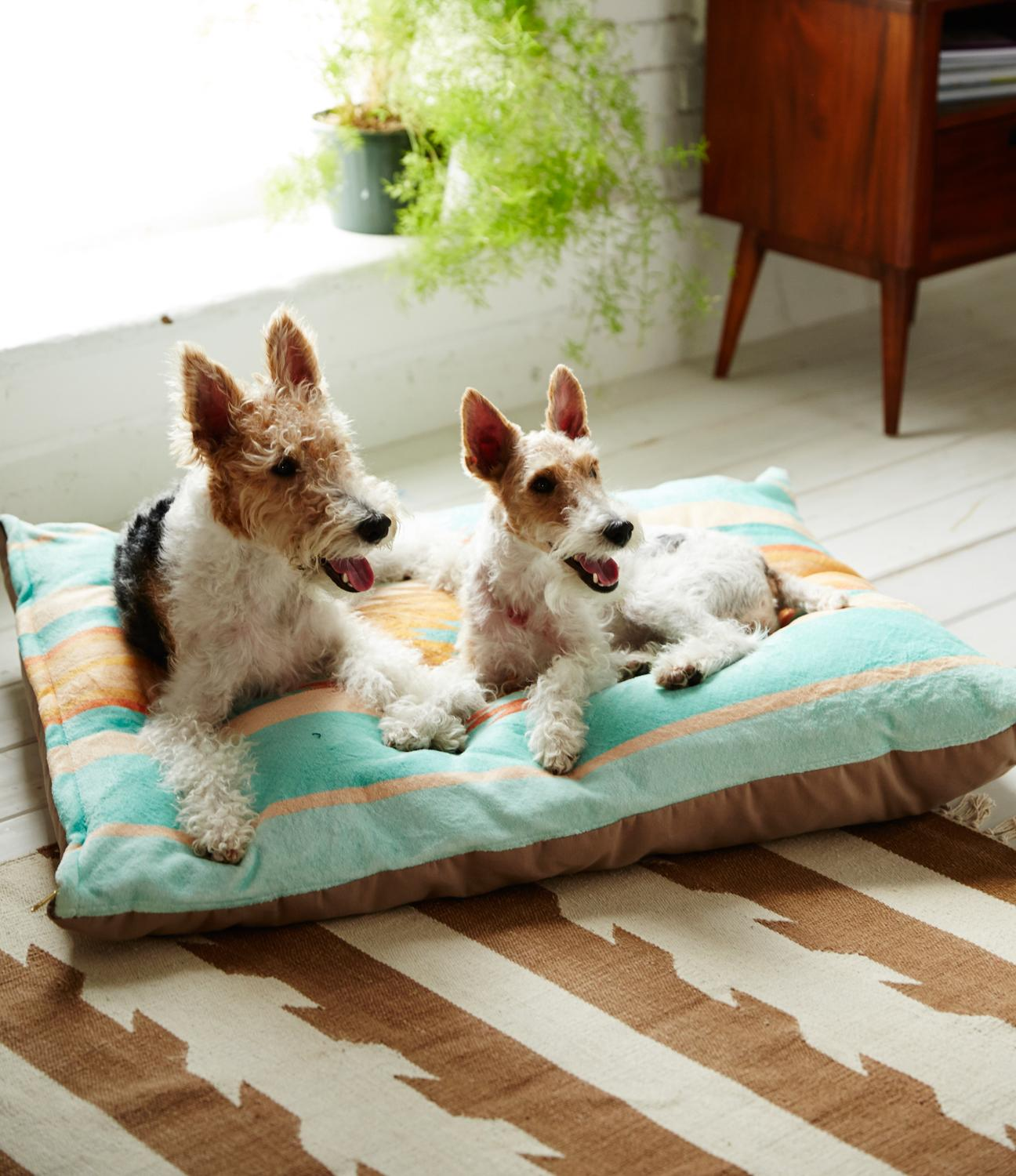 Plot twist: cute dog beds do exist! http://t.co/t3PHRPsXr8 http://t.co/rRWZIWqI93